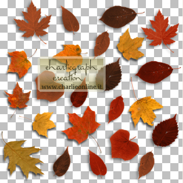 http://www.charlieonline.it/MyScrapingBook/BlogTrain/NovemberTrain/ch-Leaves1.jpg